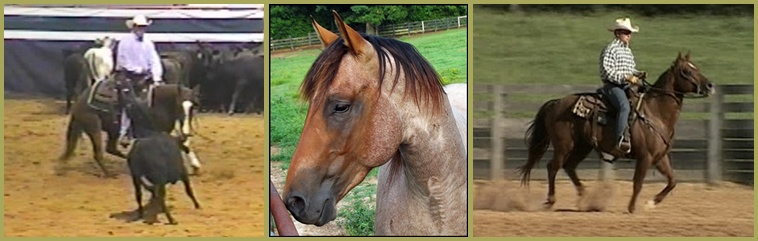 Little Creek Quarter Horse Stallions:  Thunder BC, JH Speckles Playboy, Playboys Big Step (Hobo)