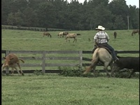Two Year Old gets Cow Horse Fence Training in Pasture